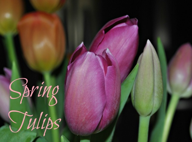 Spirng Tulips